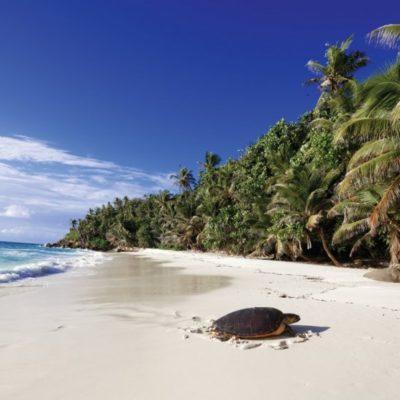 235493-seychelles-tortue-sur-la-plage-de-north